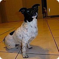 Adopt A Pet :: Gizmo - Hamilton, ON