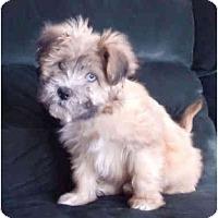 Adopt A Pet :: Judy - Mooy, AL