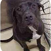 Adopt A Pet :: Suzie - Emory, TX