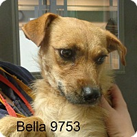 Adopt A Pet :: Bella - baltimore, MD
