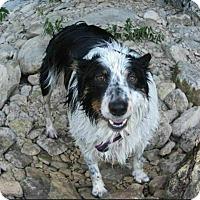 Adopt A Pet :: Maizy - Austin, TX