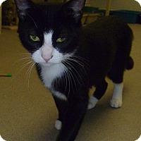Adopt A Pet :: Eliza - Hamburg, NY