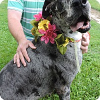 Adopt A Pet :: Crystal Blue - Springfield, IL