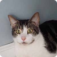 Adopt A Pet :: Koda - Queenstown, MD