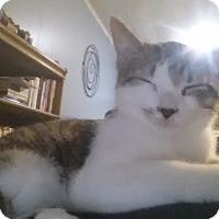 Adopt A Pet :: Sargeant - Fairborn, OH