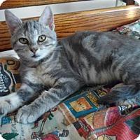 Adopt A Pet :: Gracie - Breinigsville, PA