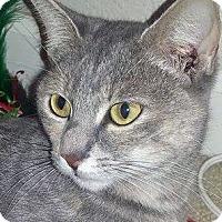 Adopt A Pet :: Rainbow - Irvine, CA
