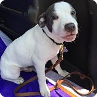 Adopt A Pet :: Wilbur-Adopted! - Detroit, MI