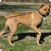 Adopt A Pet :: Karma - Erwin, TN