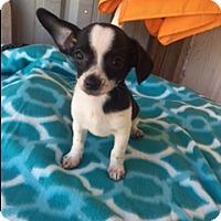 Adopt A Pet :: ZION - Elk Grove, CA