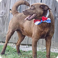 Adopt A Pet :: Ranger - Worcester, MA