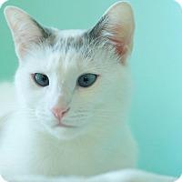 Adopt A Pet :: Sprinkles - Coronado, CA