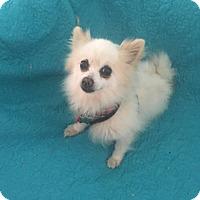 Adopt A Pet :: Bones - conroe, TX