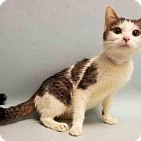 Adopt A Pet :: Fifi - New York, NY