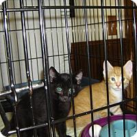 Adopt A Pet :: Jordie - Grayslake, IL