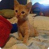Adopt A Pet :: JOLLY - Hampton, VA