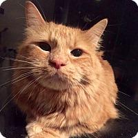 Adopt A Pet :: Biaggio - Long Beach, NY