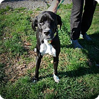 Adopt A Pet :: Abby - Transfer, PA