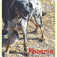 Adopt A Pet :: Phoenix- Coming 12/9 - Elburn, IL
