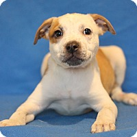 Adopt A Pet :: Byron - Waldorf, MD
