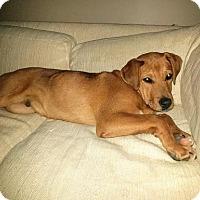 Adopt A Pet :: Ezekiel - ADOPTION PENDING - Livonia, MI
