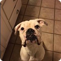 Adopt A Pet :: Bunky - Austin, TX