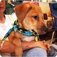 Adopt A Pet :: Baby - Scottsdale, AZ