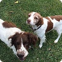 Adopt A Pet :: Rowdy & Bud - Quinlan, TX