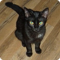 Adopt A Pet :: Sister Mary Florence - Dallas, TX
