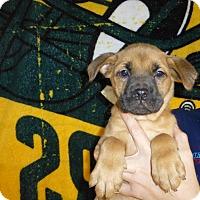 Adopt A Pet :: Penny - Oviedo, FL