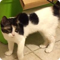 Adopt A Pet :: Francesca - Sunny Isles Beach, FL