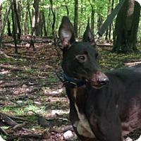 Adopt A Pet :: T's King Kuda - Gerrardstown, WV