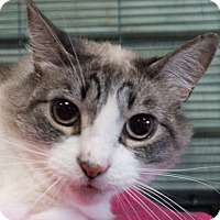 Adopt A Pet :: Mia - Redwood City, CA