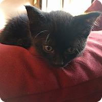 Adopt A Pet :: Shadow - Sparta, NJ