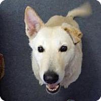 Adopt A Pet :: Babs - Fresno, CA
