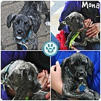 Adopt A Pet :: Mona - Kimberton, PA