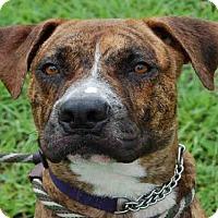 Adopt A Pet :: CHARLIE - Naples, FL