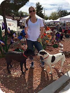 Labrador Retriever Mix Dog for adoption in Scottsdale, Arizona - Max