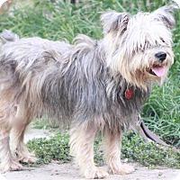 Adopt A Pet :: Harrison - Woonsocket, RI
