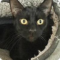 Adopt A Pet :: Faye - Salisbury, MA
