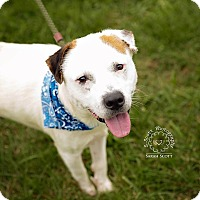Adopt A Pet :: Shaggy - RESCUED! - Zanesville, OH