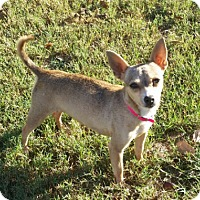 Adopt A Pet :: Nadia - Cat Spring, TX