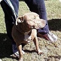 Adopt A Pet :: Carla II - Midlothian, VA