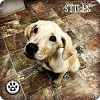 Adopt A Pet :: Stiles - Kimberton, PA