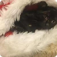 Adopt A Pet :: Casper - DFW Metroplex, TX
