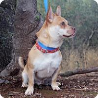 Adopt A Pet :: Buggs - Jamestown, CA