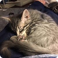 Adopt A Pet :: Greta - Austin, TX