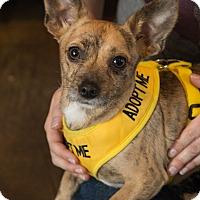 Adopt A Pet :: Vigo - Los Angeles, CA