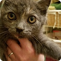 Adopt A Pet :: Cinder - Jeannette, PA