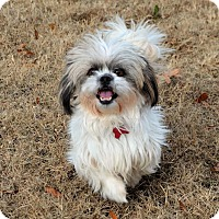 Adopt A Pet :: Miss Presha Bossypants - Westport, CT